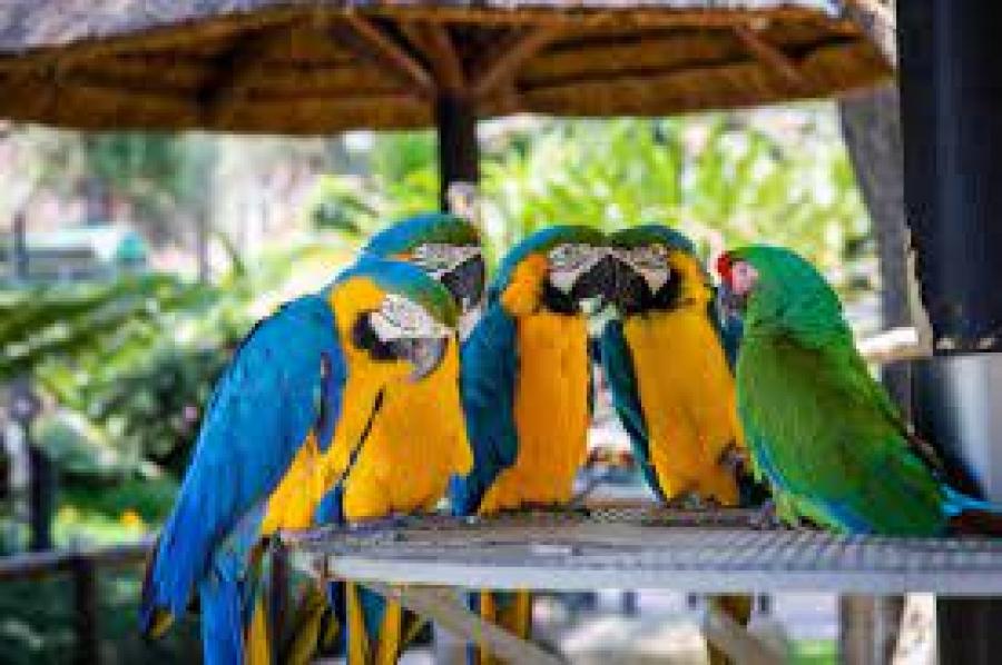 Loting kaartjes Zoo Best